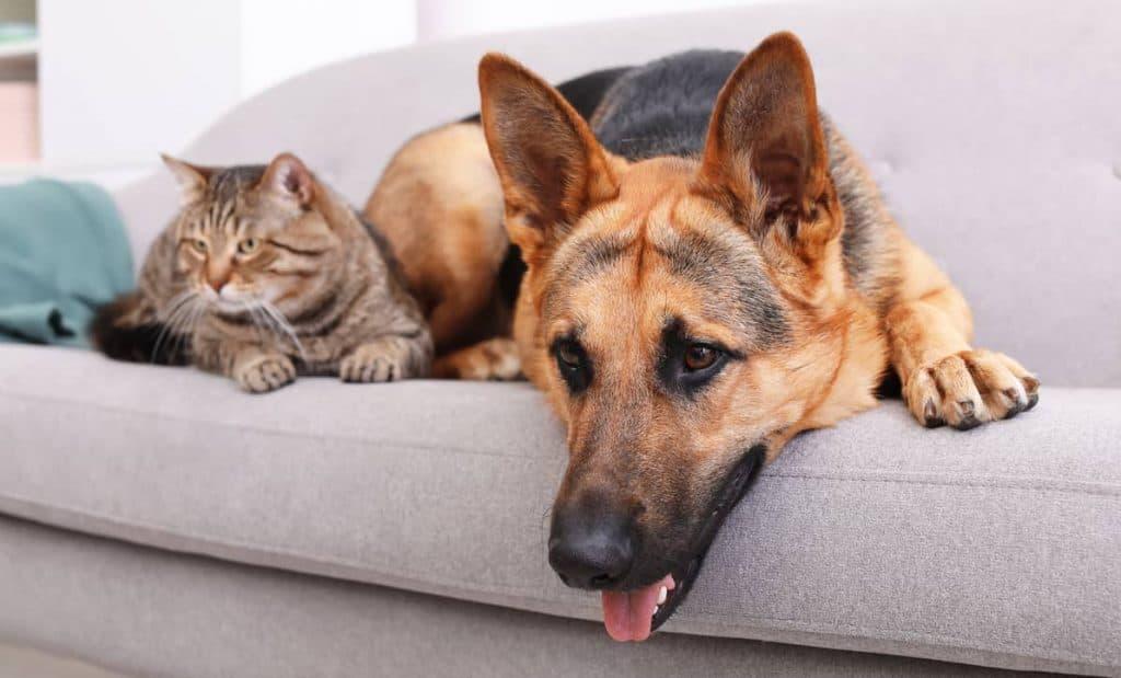 Hemlarm och husdjur på soffa